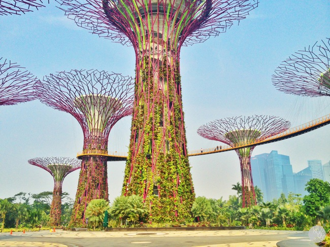 Nhu cầu về môi trường sống xanh đang dần trở thành một xu hướng