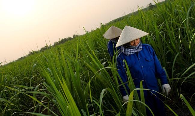 Nhập khẩu đường và bài toán phát triển bền vững cùng người lao động