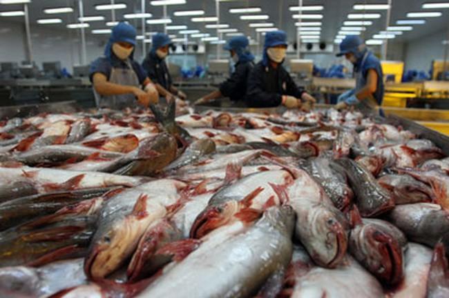 Brazil chuộng cá tra Việt Nam
