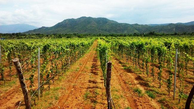 Rượu vang và món Việt – sự kết hợp đầy thú vị