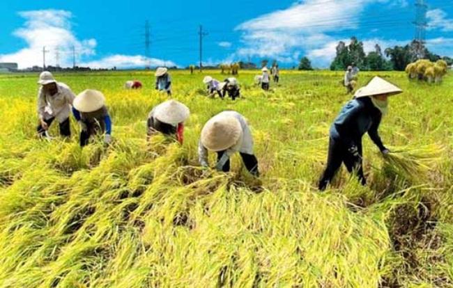 """Bộ trưởng Nông nghiệp nói gì về """"nông dân 5 nhất""""?"""