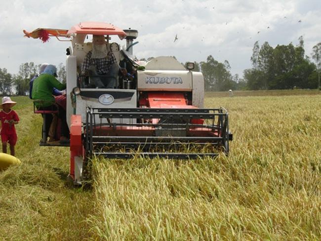 """Lúa gạo bị """"làm giá"""""""