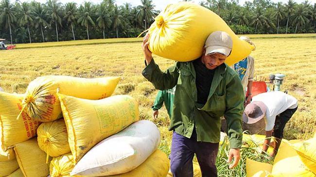 Hạn mặn kỷ lục có đủ sức giữ giá lúa gạo cả năm?