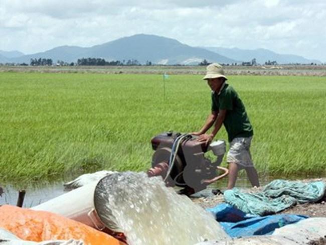 Giá lúa gạo trong nước tiếp tục xu hướng tăng nhờ xuất khẩu