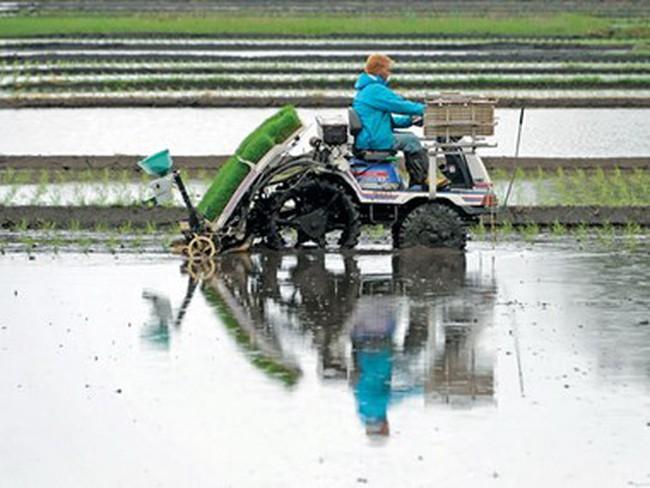 Nông dân Nhật hướng tới sản xuất thóc gạo giá rẻ để xuất khẩu