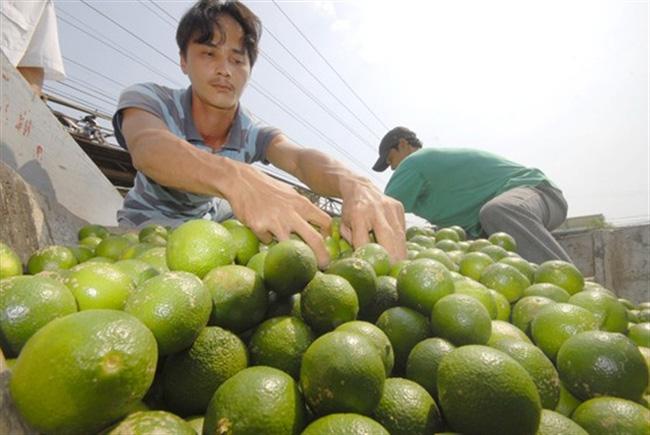 Trái cây tăng giá mạnh vì nắng nóng