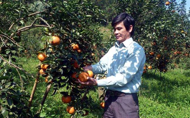 Xã có đến 41 tỷ phú 'chân đất' từ trồng cam sành