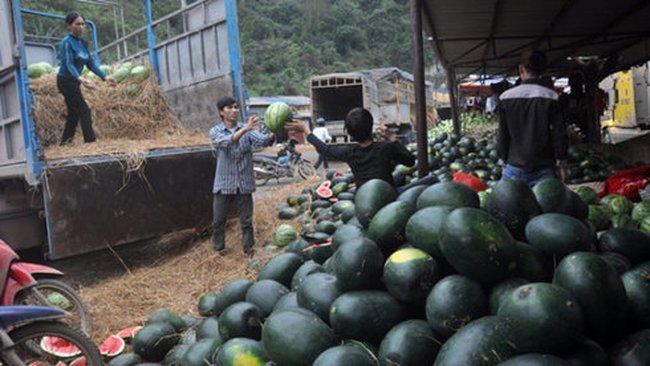 Dưa hấu xuất sang Trung Quốc giá 7.000 đồng/kg