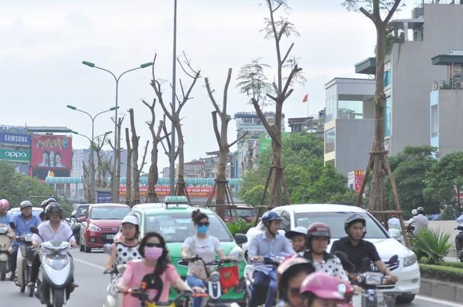 Chuyên gia Nguyễn Lân Hùng: Hà Nội rất phù hợp trồng phượng