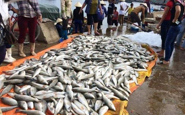 Cá chết hàng loạt ở Thanh Hóa do thủy triều đỏ