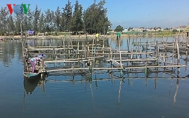Nguyên nhân ban đầu vụ cá lồng chết hàng loạt ở Thừa Thiên-Huế