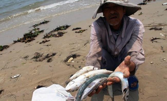 Cá chết do Formosa làm giảm GDP 6 tháng đầu năm