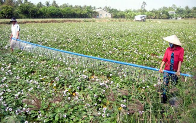 Nông nghiệp tăng trưởng âm: Lỗ hổng trong đầu tư công ở ĐBSCL?