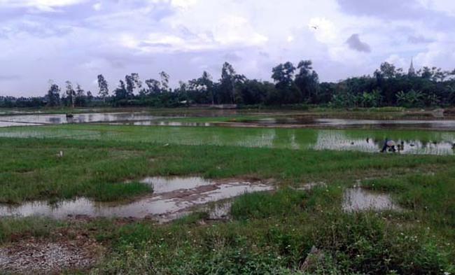 """Bình Lục, Hà Nam:  Nhiều cán bộ """"dính chàm"""" trong quản lý đất đai"""