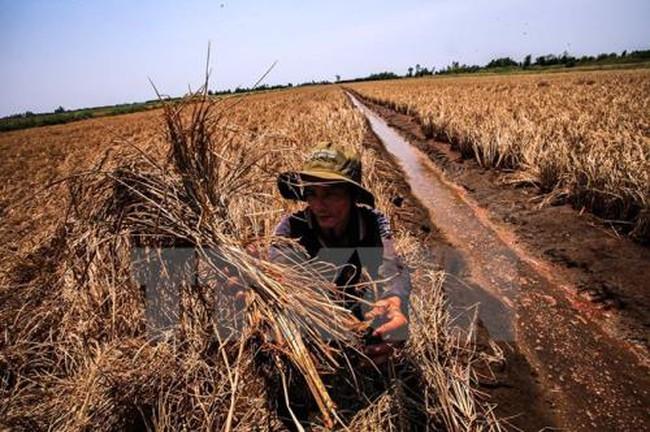 Biến đổi khí hậu khiến Việt Nam thiệt hại 15.000 tỷ đồng