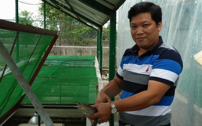 Giá cá sấu giảm sâu, nhiều người nuôi đứng trước nguy cơ vỡ nợ