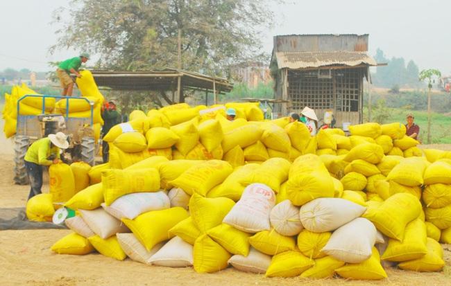 Xuất khẩu gạo giảm mạnh