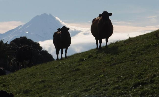 Bị quật ngã bởi Trung Quốc, công ty sữa chật vật lấy lại ngôi vương