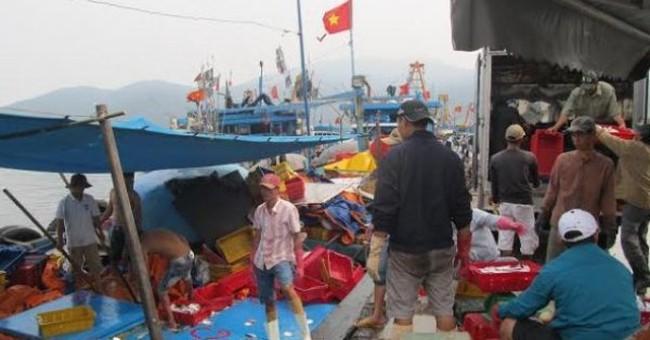 5h sáng mai, Đà Nẵng bán cá sạch tại các chợ