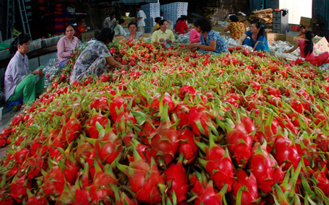 Xuất khẩu rau quả còn tăng trưởng mạnh