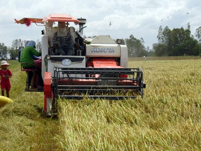 Triển vọng tốt từ xuất khẩu gạo