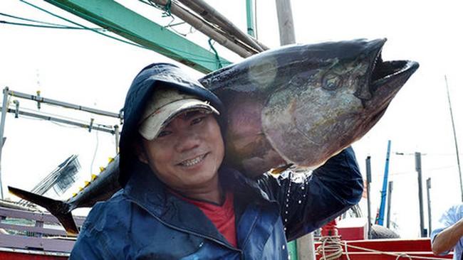 Ngư dân khai thác cá ngừ dịp tết lãi lớn