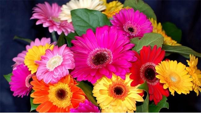 Những loại hoa Tết bạn nên mua để mang lại may mắn, tài lộc cả năm