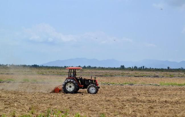 Nghịch lý giá lúa tăng cao, giá gạo xuất khẩu tiếp tục giảm
