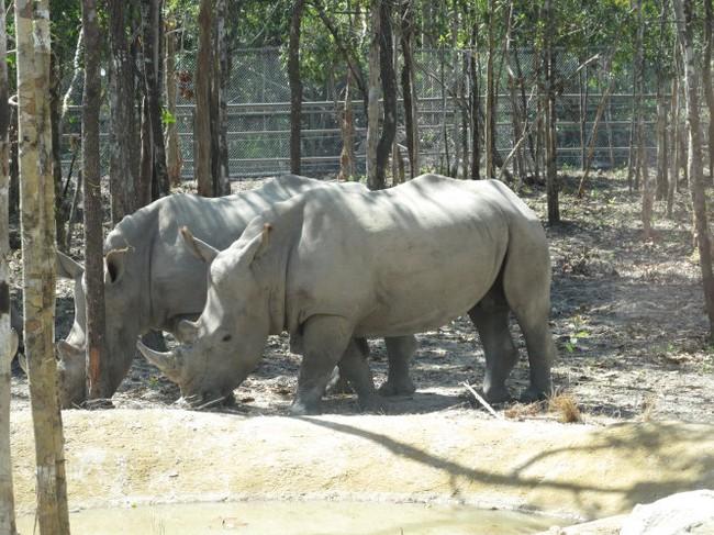 Vinpearl Safari chỉ có 130 khỉ xổng chuồng
