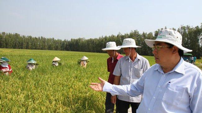 Thương nhân nước ngoài săn tìm gạo Việt