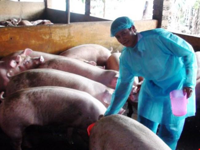 Biên Hòa: Phát hiện gần 1.000 con heo nuôi bằng chất cấm