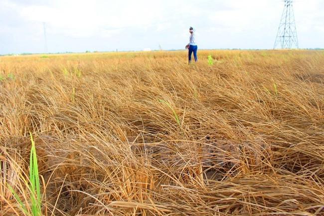 WB dành 310 triệu USD giúp Việt Nam chống chọi với biến đổi khí hậu