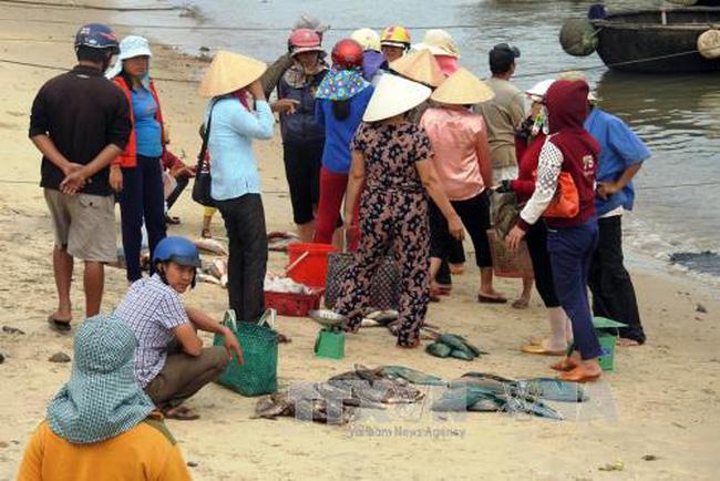 Xử lý hiện tượng cá chết bất thường tại ven biển Bắc Trung Bộ