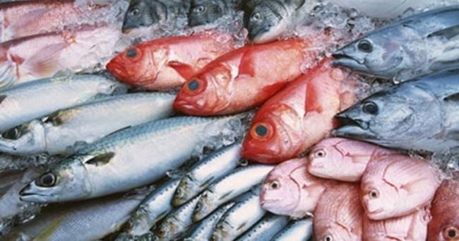 Quảng Bình tồn đọng 3500 tấn hải sản đông lạnh