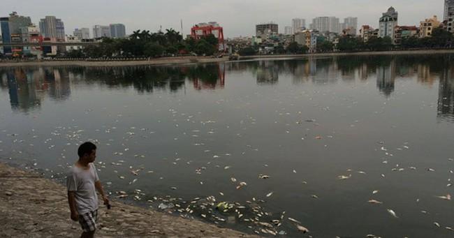 Nguyên nhân cá chết ở hồ Hoàng Cầu (Hà Nội) là do thời tiết?