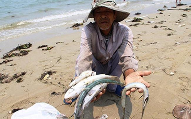 Vụ cá chết hàng loạt: Chính phủ sẽ hỗ trợ ngư dân