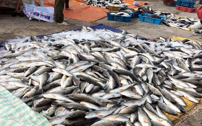Báo cáo Thủ tướng vụ cá chết bất thường ở biển Thanh Hóa