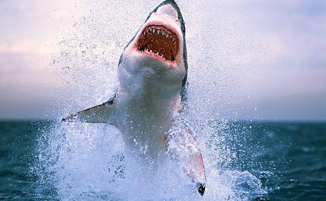 'Cá mập' tỉnh lẻ nuốt chửng 'đất vàng' Thủ đô