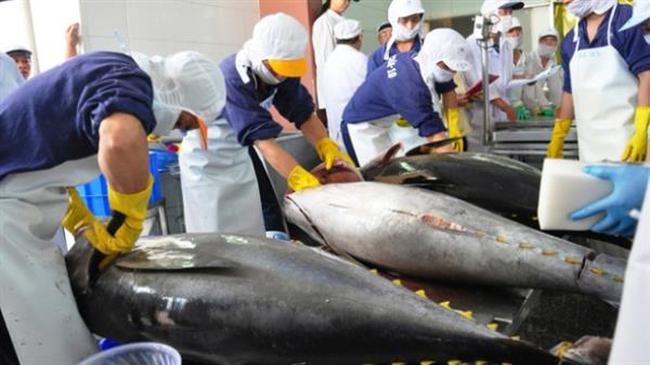 Xuất khẩu cá ngừ phục hồi trở lại