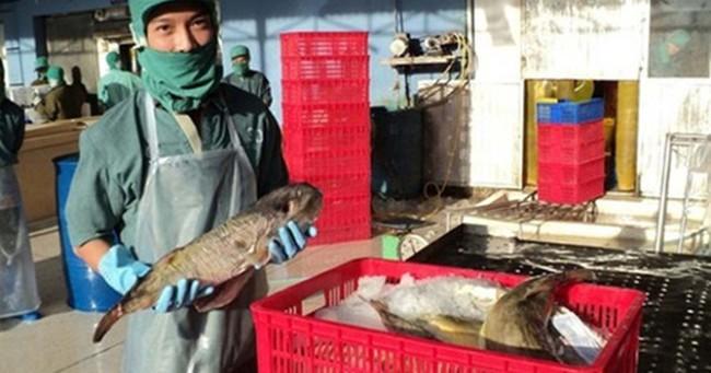 Xây dựng cơ chế quản lý hoạt động xuất khẩu cá nóc