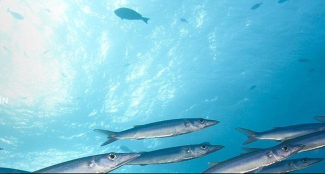 """Doanh nghiệp sản xuất cá sạch này dự báo sẽ """"trúng lớn"""" sau vụ Formosa"""