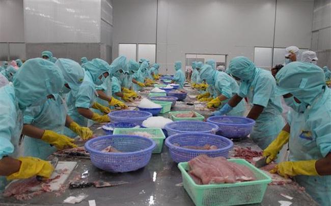 Tạm ngừng đăng ký nếu chưa từng xuất khẩu cá tra sang Hoa Kỳ