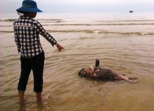 Chính phủ yêu cầu làm rõ nguyên nhân hải sản chết bất thường