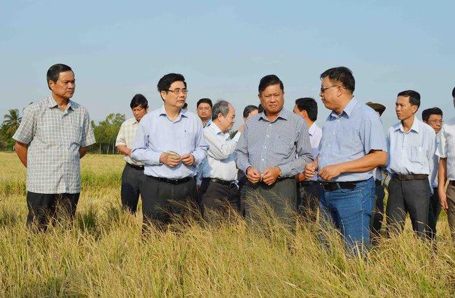 """Hàng chục ngàn hécta lúa tại U Minh Thượng bị """"nhấn"""" trong ngập mặn"""