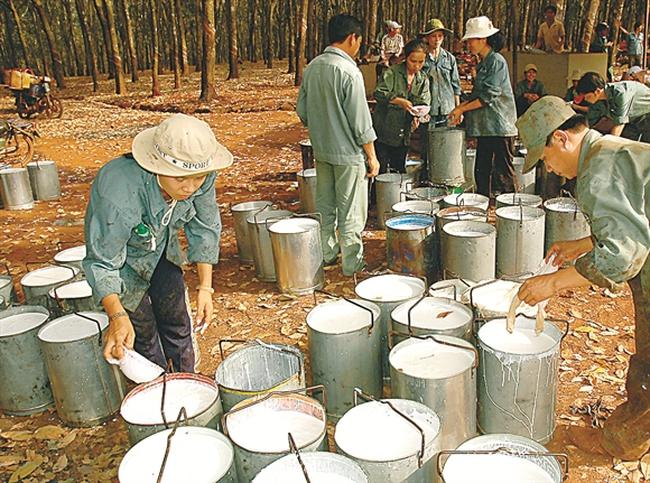 Gemadept chính thức được cấp phép trồng cây cao su tại Campuchia