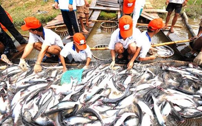 Cán bộ Tổng cục Thủy sản cấp khống hồ sơ hơn 800 sản phẩm