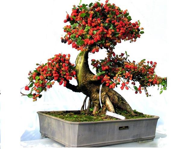 5 loại cây không nên trồng trong nhà nếu không muốn gặp xui xẻo