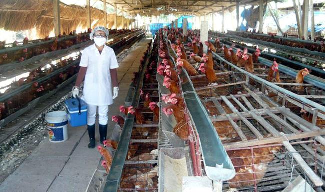 Báo động ngành chăn nuôi