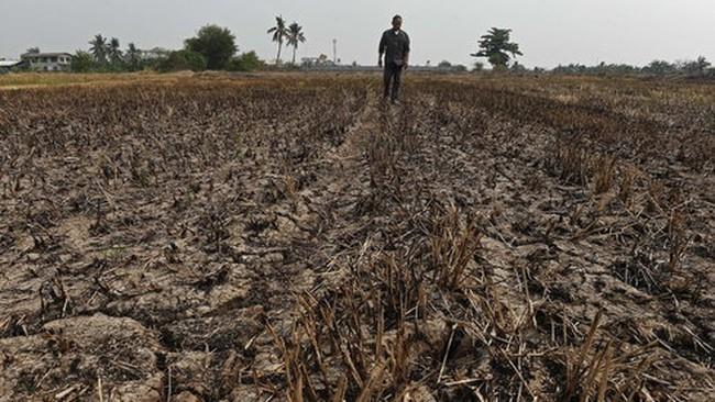 """Châu Á trong đợt nóng """"thiêu đốt"""", hơn 300 người chết"""