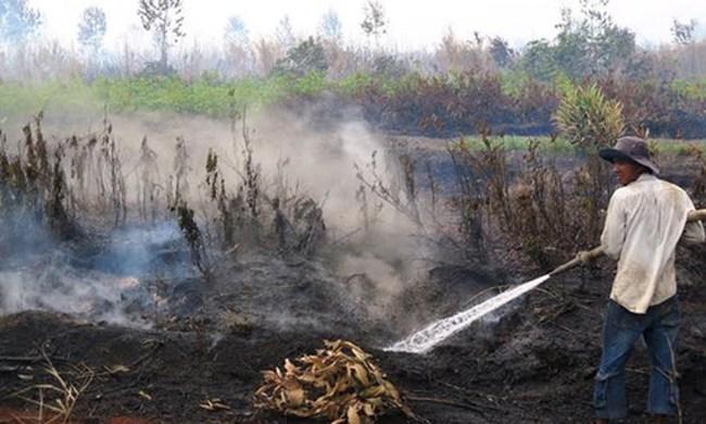 Cháy lớn rừng U Minh Hạ